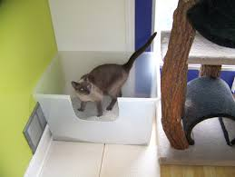 image covered cat litter. A Large Box With Two Exit Routes, Out The Front Or Jump Top Image Covered Cat Litter