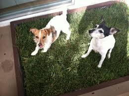 dog potty grass tips