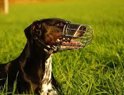 Der Hundehalter Des Hundehalters Größter Feind Planet Hund