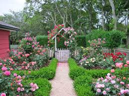 designs mehmetcetinsozlercom knockout roses with boxwood hedge in front of  garden house http knockout Front Yard