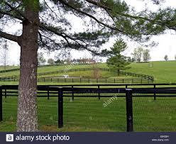 fencing lexington ky. Fine Fencing Una Granja De Caballos Pura Raza Con Cercas Negro Fuera Lexington  Kentucky In Fencing Lexington Ky T