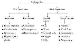 Components Of Ecosystem Flow Chart Major Eco Systems