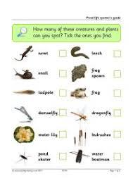 Pond Creatures Identification Chart Uk Inspiring Pond