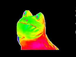 we like to party rainbow frog - YouTube via Relatably.com