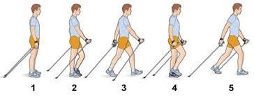 Nordic walking abnehmen erfahrungen