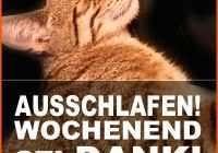 70 Great Fotos Of Lustige Sprüche Und Bilder Zum Wochenende Utconcerts