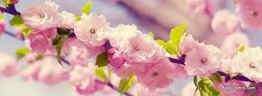 spring sakura flowers facebook timeline cover picture flowers facebook timeline image free flowers