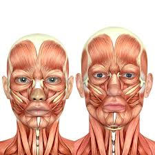 face anatomy 3d male and female face anatomy together stock illustration