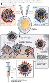 Grippeimpfstoff schutzt nicht ile ilgili görsel sonucu