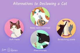 declawing cats and humane alternatives