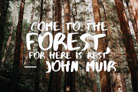 Forest Quotes Magnificent 48 John Muir Quotes To Inspire You To Take A Muir Woods Tour