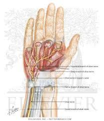 radial nerve motor hand