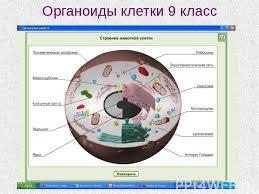 Проверочная работа по теме Органоиды клетки класс  называют Контрольная биология 10 класс органоиды клетки
