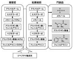 アスパルテーム l フェニルアラニン 化合物