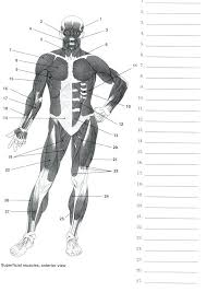 Printable Human Body Anatomy Muscles Worksheets On Pictures Inner ...
