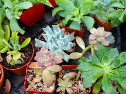 denver garden centers. Denver Plants Garden Centers