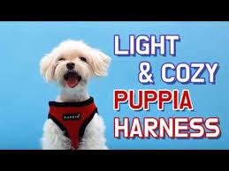 Puppia Soft Dog Harness Sizing Chart Puppiaus