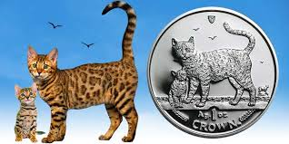 Cost And Other Things To Consider Before Buying A Bengal Cat