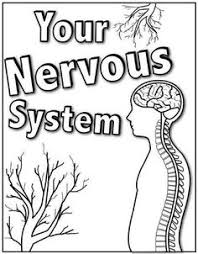 a1fef28f194d6f37464be2225c92365f nervous system for kids body systems diagram of the nervous system for kids nervous system on nervous system printable