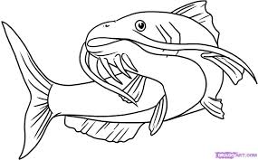 Small Picture Catfish Coloring Page 6601 16gif Coloring Pages Maxvision