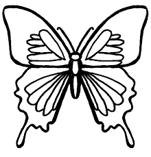 Small Picture Bug Museum Bug Coloring Pages Butterfly 1