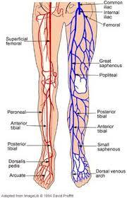Leg Vein Chart 10 Best Leg Vein Solutions Images Varicose Veins Rosacea