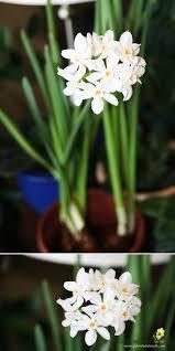 White Paper Flower Bulbs Gabriela Delworth