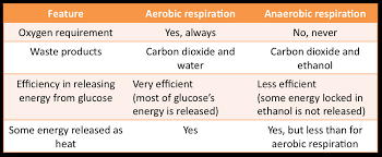 yr 8 topic 3 gas exchange system and respiration amazing world