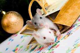 Christmas Mice - Meet Your Mouse