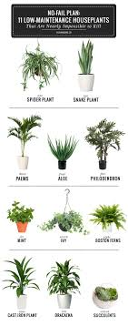 small plant for office desk. exellent desk chic small office plants 103 for desk india easy to  grow houseplants  throughout plant o