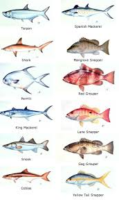 More Examples Of The All The Fish In The Florida Keys Fish