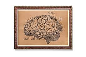 Brain Chart Amazon Com Brain Chart Print Anatomical Poster Anatomy Gift