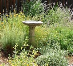 landscape plants for california gardens landscape plants for gardens astounding best native ideas on water landscape
