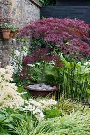 Japanese Garden Plants Best 25 Japanese Maple Garden Ideas On Pinterest Bloodgood
