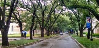 rice university campus trees. Rice University Campus Has Lovely Canopy Of Oak Trees Intended
