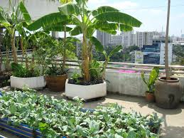 ideas diy garden with edible rooftop lawn images gardening on budget backyard a