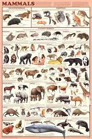 Laminated Mammals Educational Animal Chart Poster