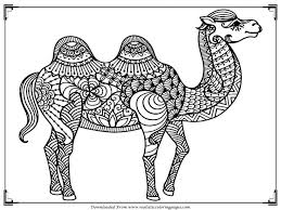 Small Picture Coloring Pages Smiling Camel Color And Bw Royalty Free Stock