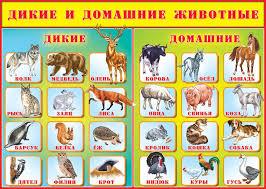 Картинки по запросу животный мир для детей