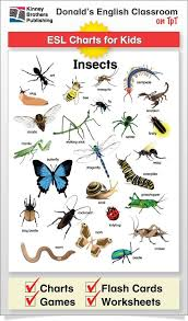 Insect Chart English Classroom Learn English Words