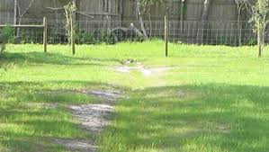 drainage ditch how to build a grassy drainage swale