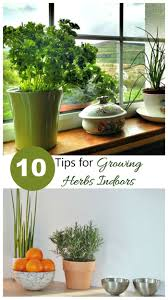 these 10 tips will give you the flavor of fresh herbs all year long use