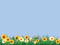 Wallpapers For Ppt Download Free Daisy Flower Unique Wallpaper Ppt Backgrounds