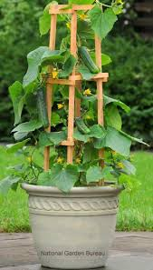 container gardening with vegetables