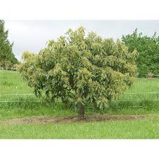 Plant Cyclamen 15cm  Bunnings WarehouseFruit Tree Netting Bunnings