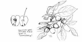 Kinderpleinen Appel Appels Fruit