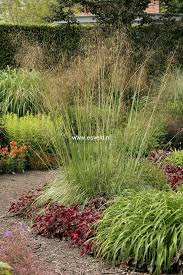 Small Picture 478 best garden design II images on Pinterest Ornamental