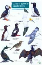 Guide To Summer Coastal Birds Identification Chart By