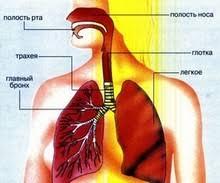 Туберкулез бронхов трахеи верхних дыхательных путей диагностика Перельман М И Корякин В А Туберкулез бронха