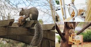 9 squirrel feeder diy ideas for the garden